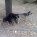 АХВ ќе поднесе прекршочна пријава против сопственикот на кучињата кои го нападнаа четиригодишното дете во кичевскo
