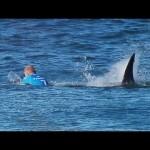 surfer i ajkula