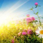 vreme sonce